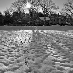 "photo ""March snow"""