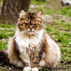"фото ""Сердитый кот"""