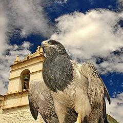 "фото ""храмовый орел"""