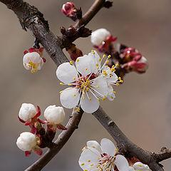 """фото """"Дань весне"""""""