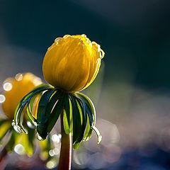 """фото """"april morning"""""""
