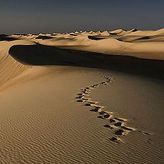 """фото """"Dunes 14"""""""