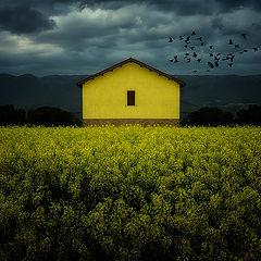 "photo ""yellow on yellow"""