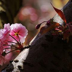 "фото ""Pink Blossom"""