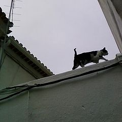 "фото ""The cat: Torres Vedras roof  (hihihi)"""