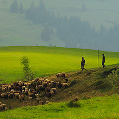 "фото ""пастушье утро в Карпатах"""
