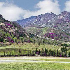 """фото """"Цветущие горы"""""""