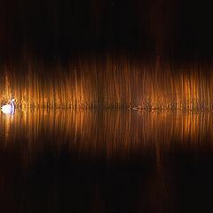 "photo ""Euphony of light"""