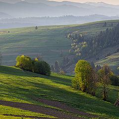"""фото """"туманные холмы в Карпатских горах на рассвете"""""""