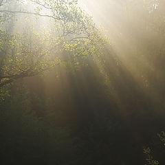 "photo ""Mysterious light"""
