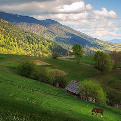 """фото """"карпатский пейзаж с красным конем:)"""""""