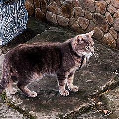 """фото """"монастырский кот"""""""
