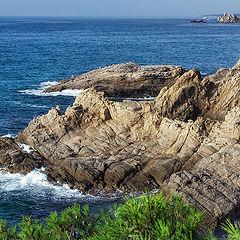"""photo """"море скалы сосны"""""""