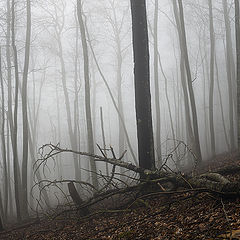 "photo ""Fogs of the Neberdjay"""
