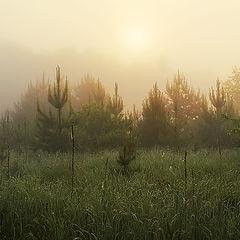 "photo ""Morning in fog"""