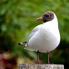 "фото ""A Birdie"""