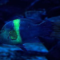 "фото ""Fishy"""