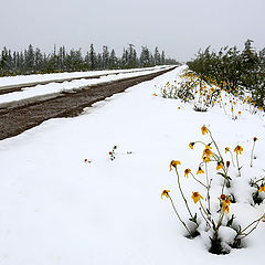 "фото ""Летние снегопады"""