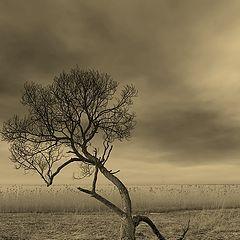 """фото """"Пейзаж с деревом"""""""