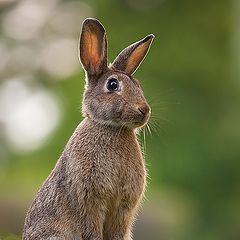 """фото """"Rabbit"""""""
