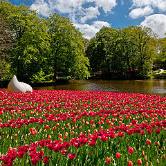 """фото """"Keunkenhof. Парк тюльпанов."""""""