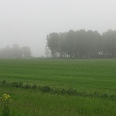 """фото """"Туманное утро"""""""