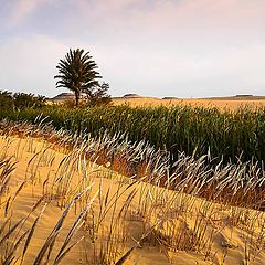 """фото """"OASIS IN THE DESERT"""""""
