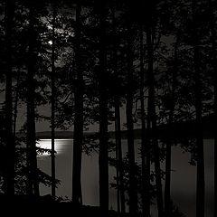"photo ""Moonlit Night"""