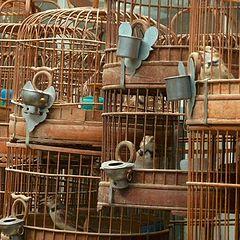 "фото ""Ария на птичьем рынке"""