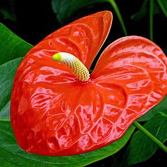 "фото ""Red Tropical"""