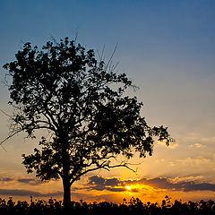 """фото """"Закат над полем"""""""