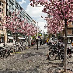 """фото """"Про велосипеды и цветущие деревья."""""""