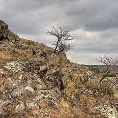 """фото """"И на камнях растут деревья... (1)"""""""