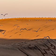 """фото """"Над песчаными волнами"""""""