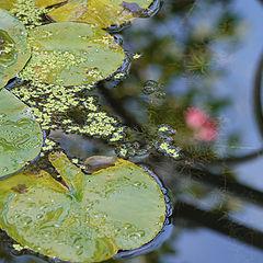 """фото """"Reflections"""""""