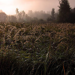 """фото """"Утро в деревне"""""""