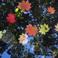 """фото """"Осенний каледоскоп"""""""