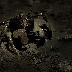 """фото """"Crab"""""""