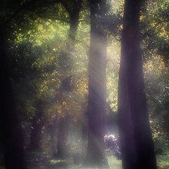 "фото ""Осенний вечер"""