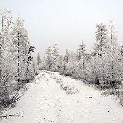 """фото """"Белая зима"""""""