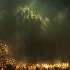 "photo ""Rain of light"""