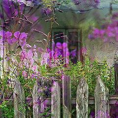 """фото """"Сны старого дома"""""""