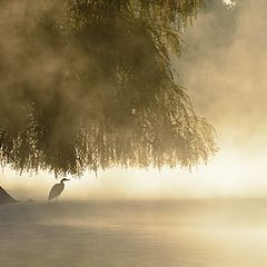 "photo ""heron in a morning mist"""