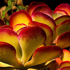 """фото """"Cactus 2"""""""