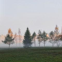 """photo """"Meadow in fog"""""""