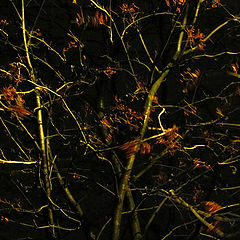 "фото ""дерево"""