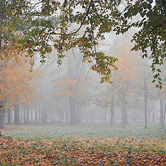 "фото ""Осеннее утро в парке"""