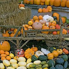 "фото ""Season of Pumpkins"""