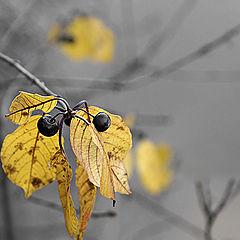 "фото ""Осенью."""