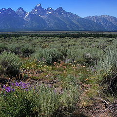 "photo ""Grand Tetons"""